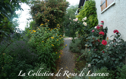 La collection de Roses de Laurence