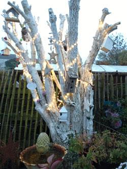 Prot ger ses rosiers pour l 39 hiver et planter ses racines nues filroses le temps des roses - Quoi planter en novembre ...