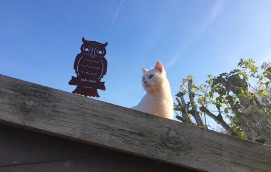 Chat blanc Pepiniere